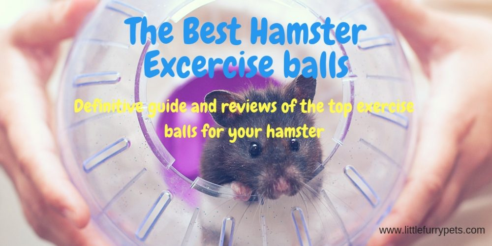 Best Hamster exercise balls
