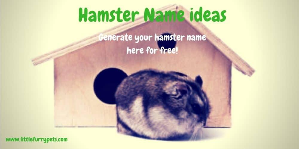 Best Hamster Name ideas