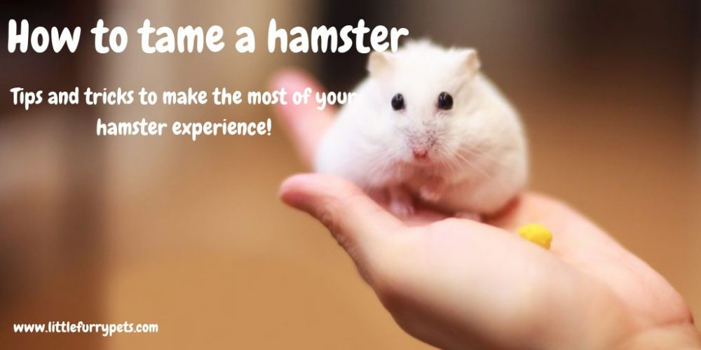 How to tame a hamster – All you need to know