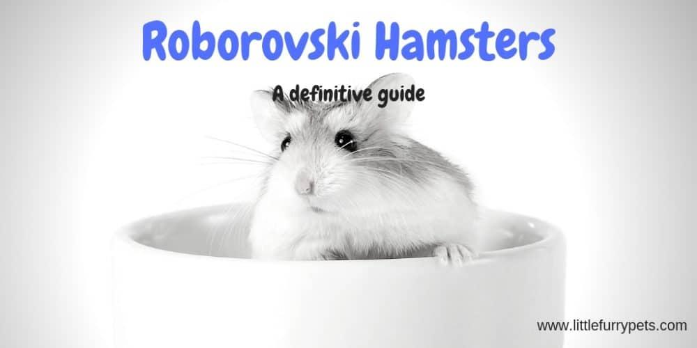 Roborovski dwarf hamster – All you need to know