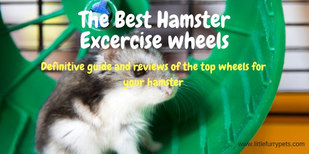 Best Hamster exercise wheels
