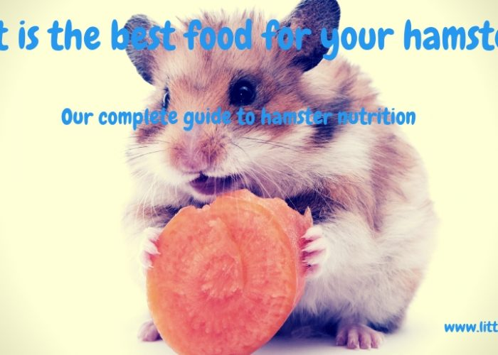 What do Hamsters Eat? The Ultimate Guide to Hamster Nutrition