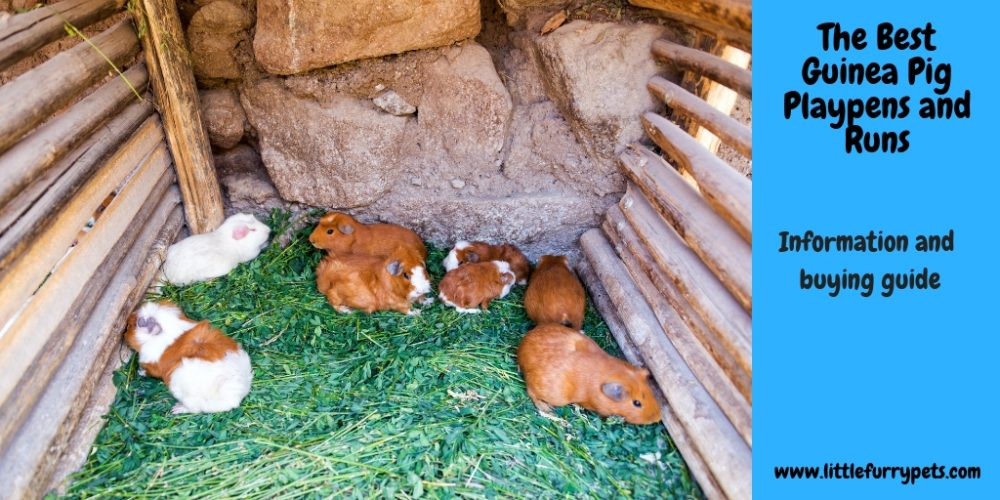 The Best Guinea Pig Playpens and Runs