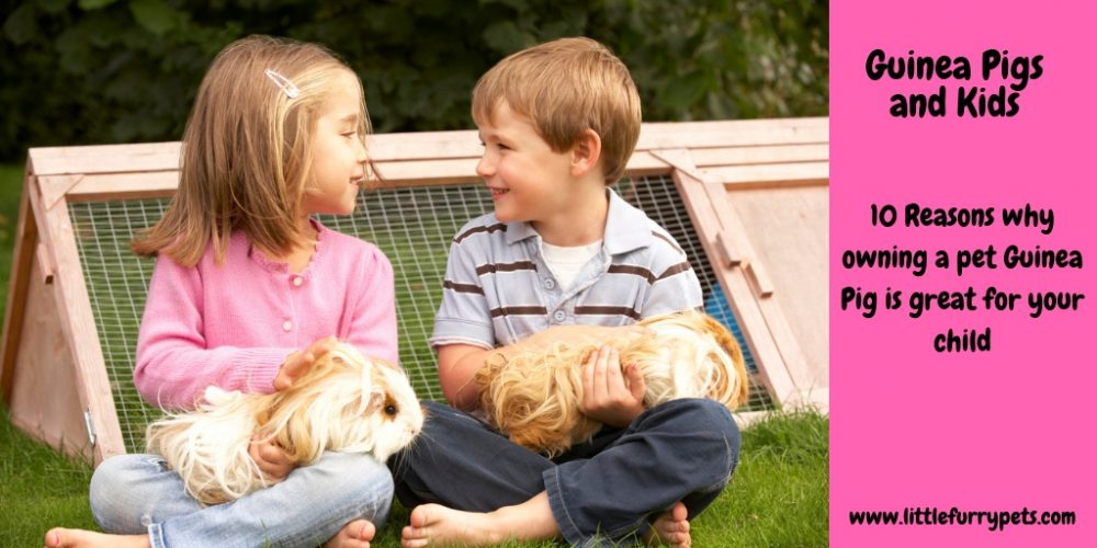 10 Reasons why Guinea Pigs are good pets for Kids!