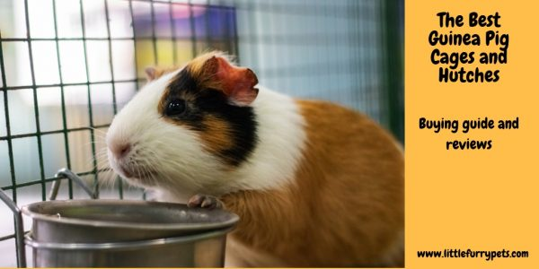 The Best Guinea Pig Cages Available to buy now