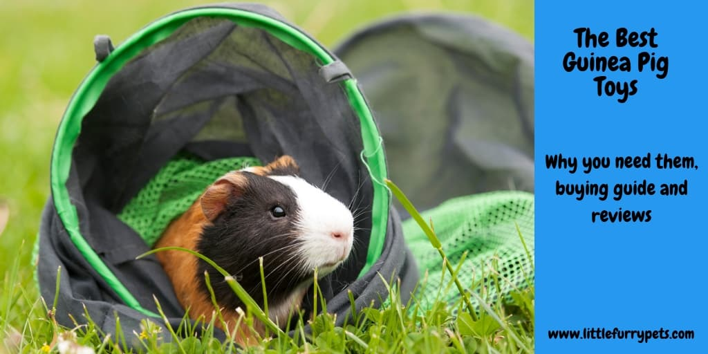 Guinea Pig in a tunnel