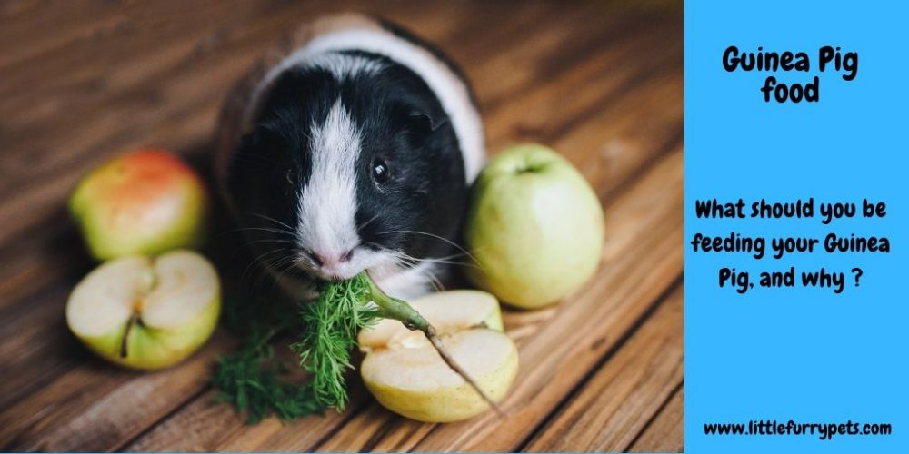 The Best Food for a Guinea Pig