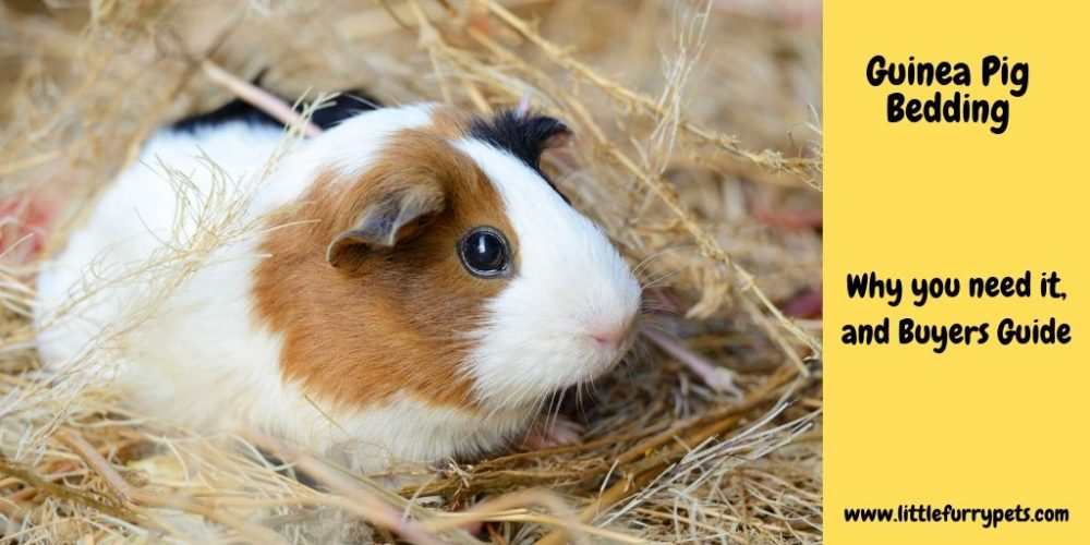 The Best Guinea pig bedding for your pet