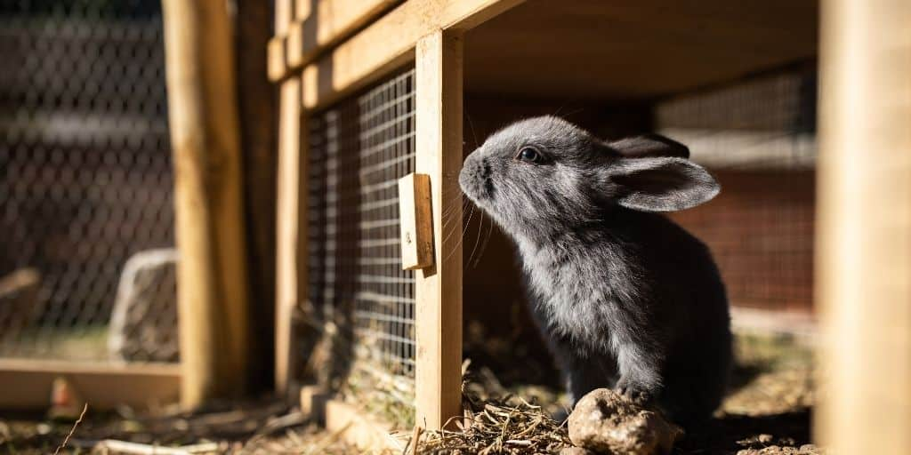 Best Rabbit Hutch or Cage
