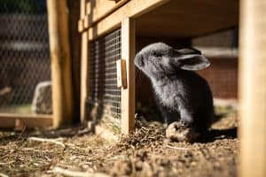 the best rabbit hutch