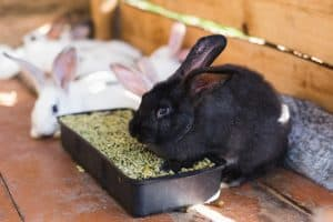 what can rabbits eat