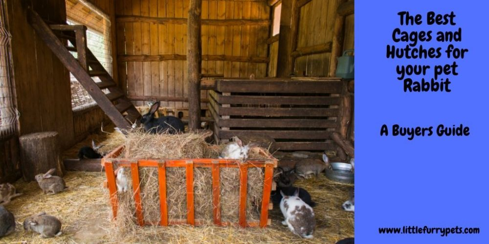 The Best Rabbit Cage or Hutch for your Pet