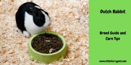 Dutch Rabbit – Breed Guide and Care Tips