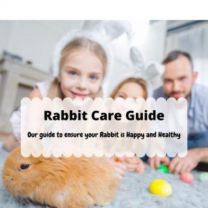 Rabbit Care Guide