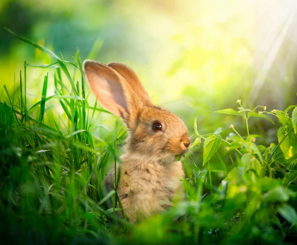 Rabbit in a meadow in the spring sunlight
