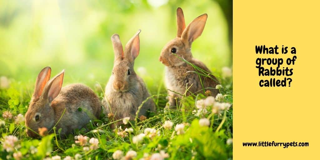 3 rabbits in a field