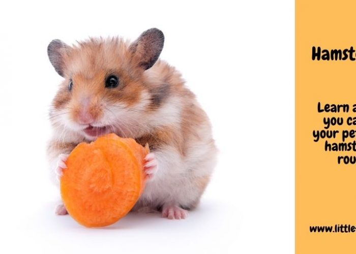 Hamster Facts – A round up of interesting Hammy Titbits
