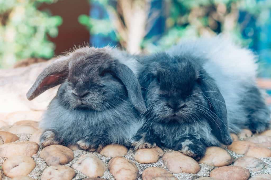 The cute rabbits are resting in garden.
