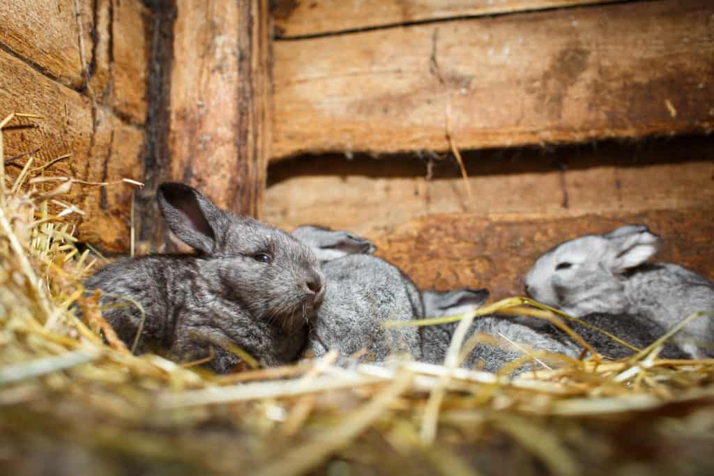 A small group of rabbits in a hutch