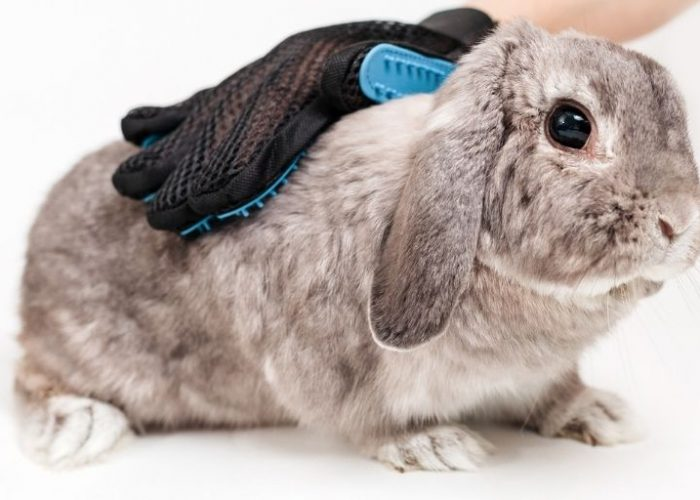 How To Groom a Rabbit: The Complete Guide