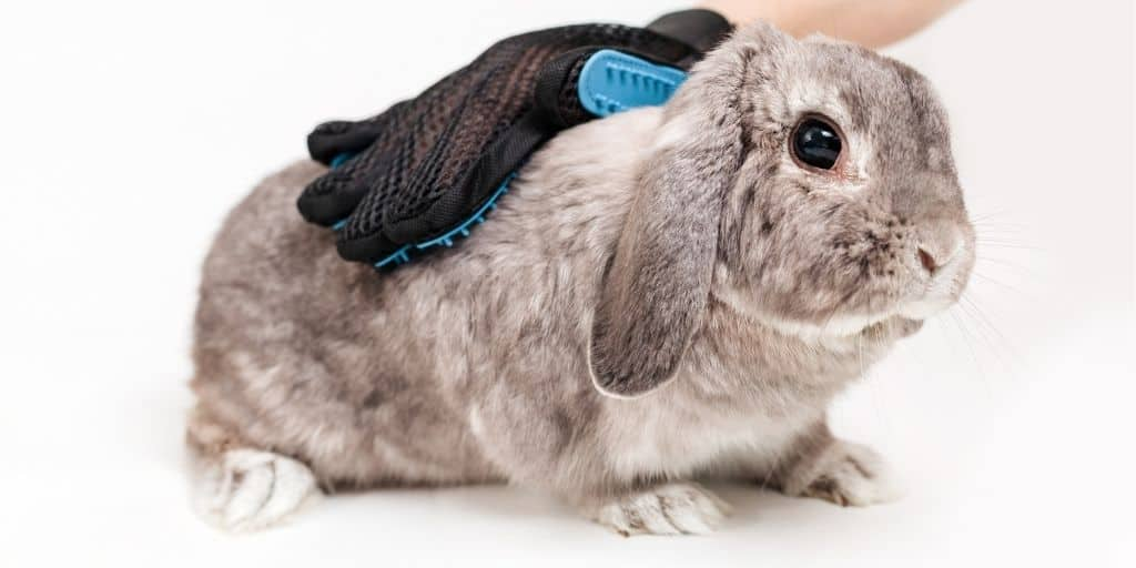 How To Groom a Rabbit