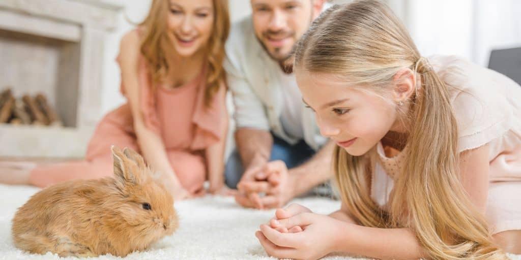 Rabbit Supplies Guide