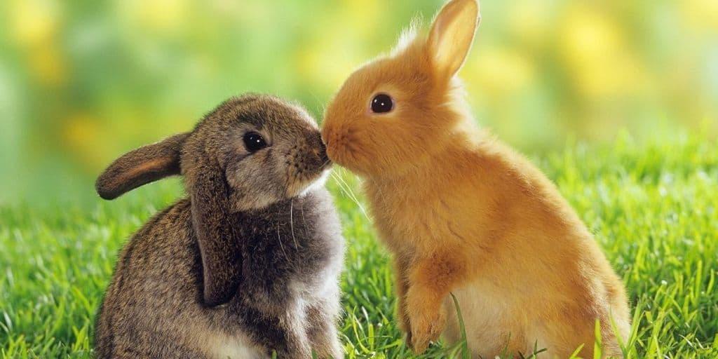 Spaying and Neutering Rabbits