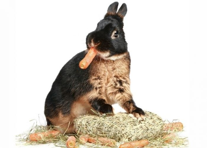 The Best Rabbit Food: Nine Delicious Options for 2021