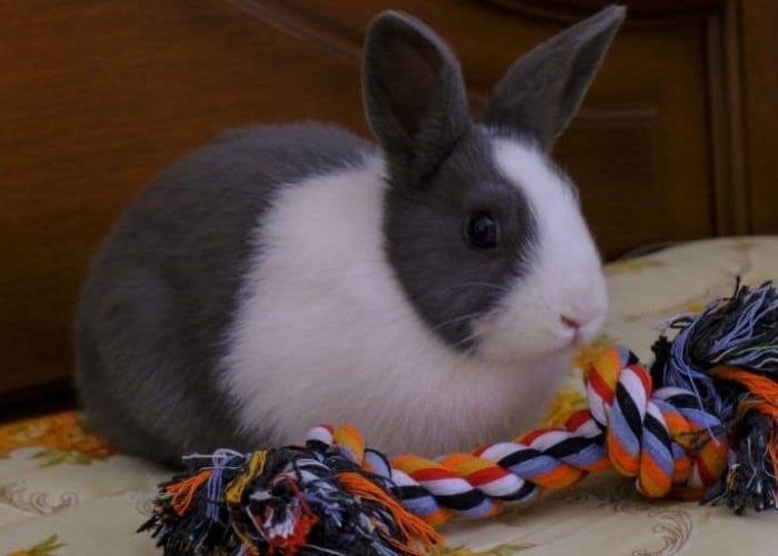 Eight Best Rabbit Toys of 2021 – Review + Buyer's Guide