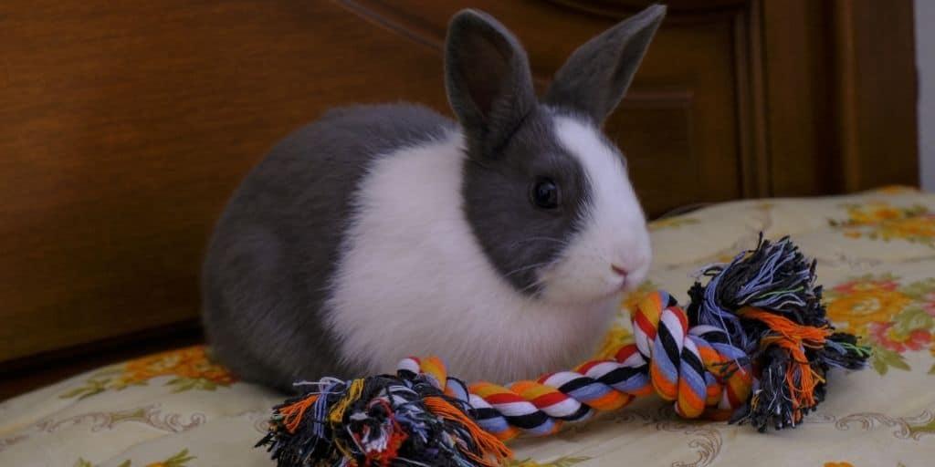 Best Rabbit Toys